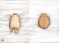 Creepy Cat 15 - Pillow